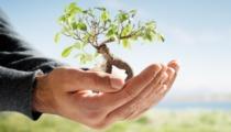 Cuidados básicos para tus plantas