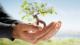 https://www.viviendasaludable.es/wp-content/uploads/2013/10/Cuidados-basicos-para-tus-plantas.png