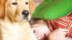 Cuidados ecológicos para tu mascota