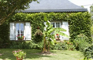 Fachadas vegetales en viviendas