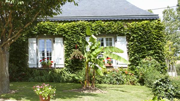 Fachadas-vegetales-en-viviendas