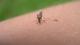 Trucos para librarse de los mosquitos en verano
