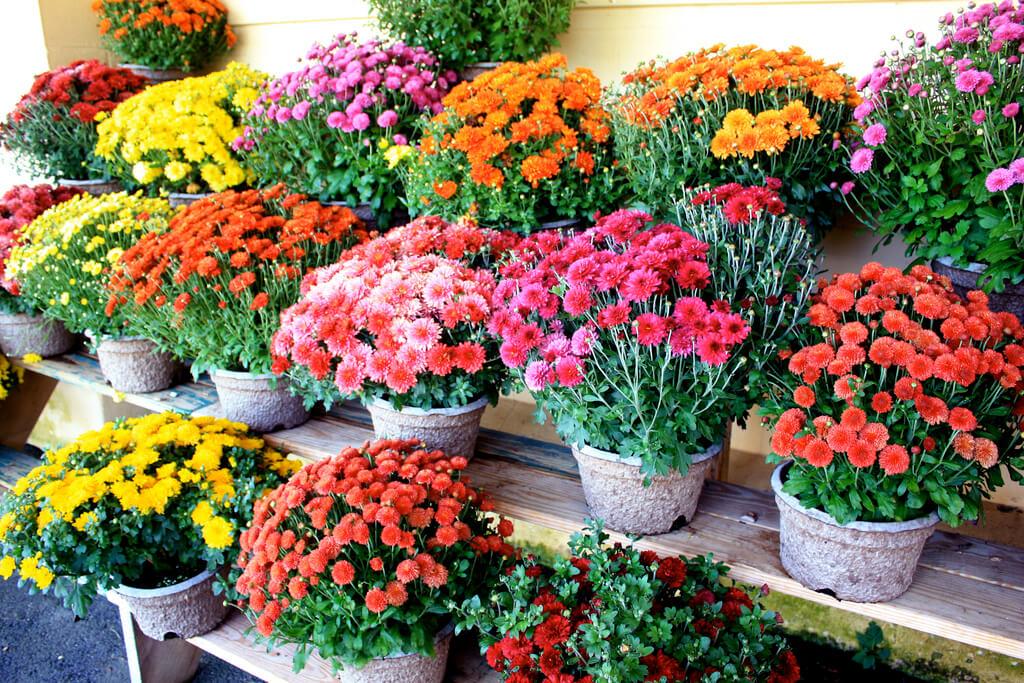 Cuidados en otoño para tu jardín