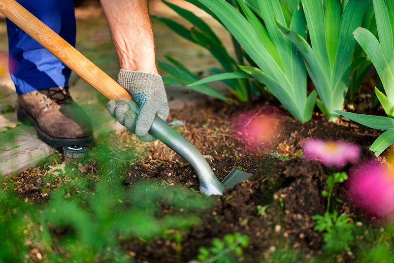 cuidados para el jardín en otoño