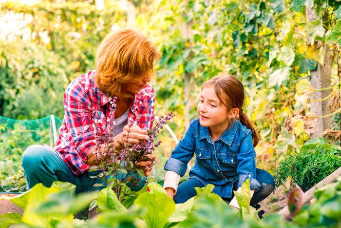 qué plantar en otoño