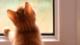 http://www.viviendasaludable.es/wp-content/uploads/2014/11/Condensacion-en-las-ventanas-caracteristicas-y-soluciones.png