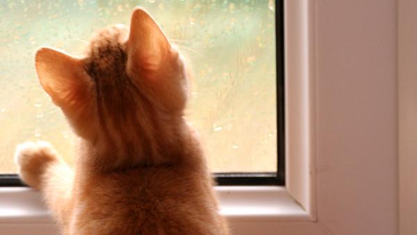 Condensación en las ventanas: características y soluciones