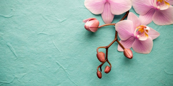 vivienda-saludable-especial-primavera