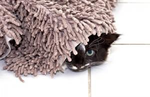 Ácaros en la alfombrilla de baño