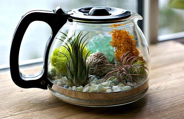 DIY: terrario con jarra de café