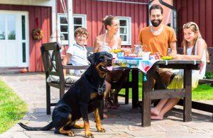 Familia comiendo en el jardin con mascota