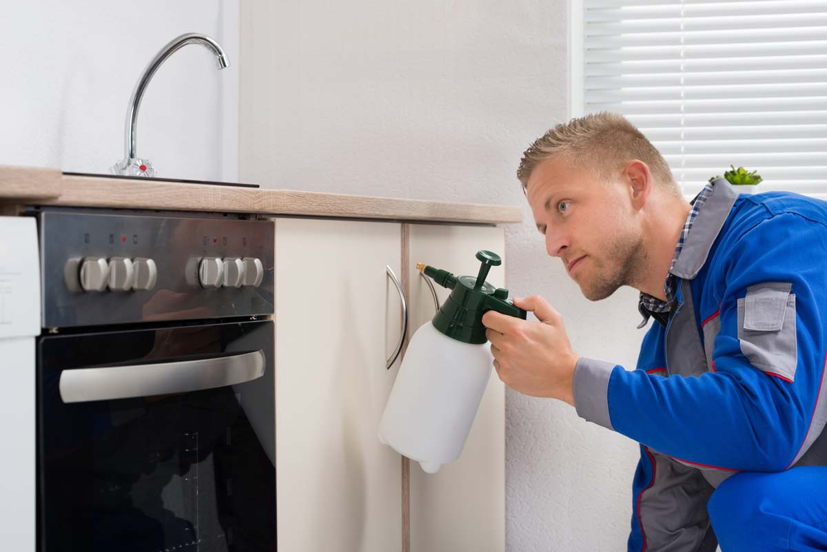 Cómo combatir las plagas en el hogar