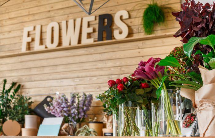 Flores y plantas de interior
