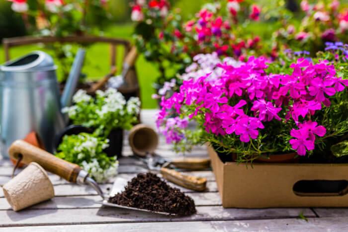 cuidar mi jardin en verano
