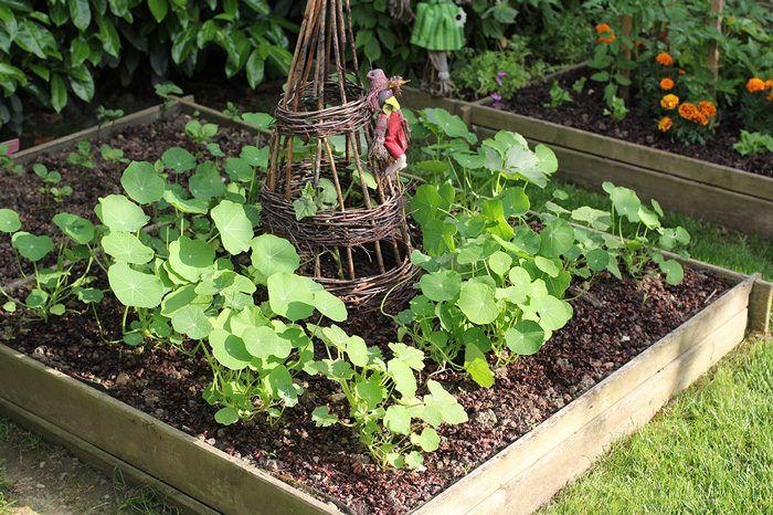 cómo organizar el jardín