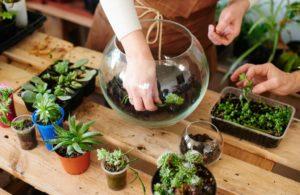ideas para hacer un terrario en casa