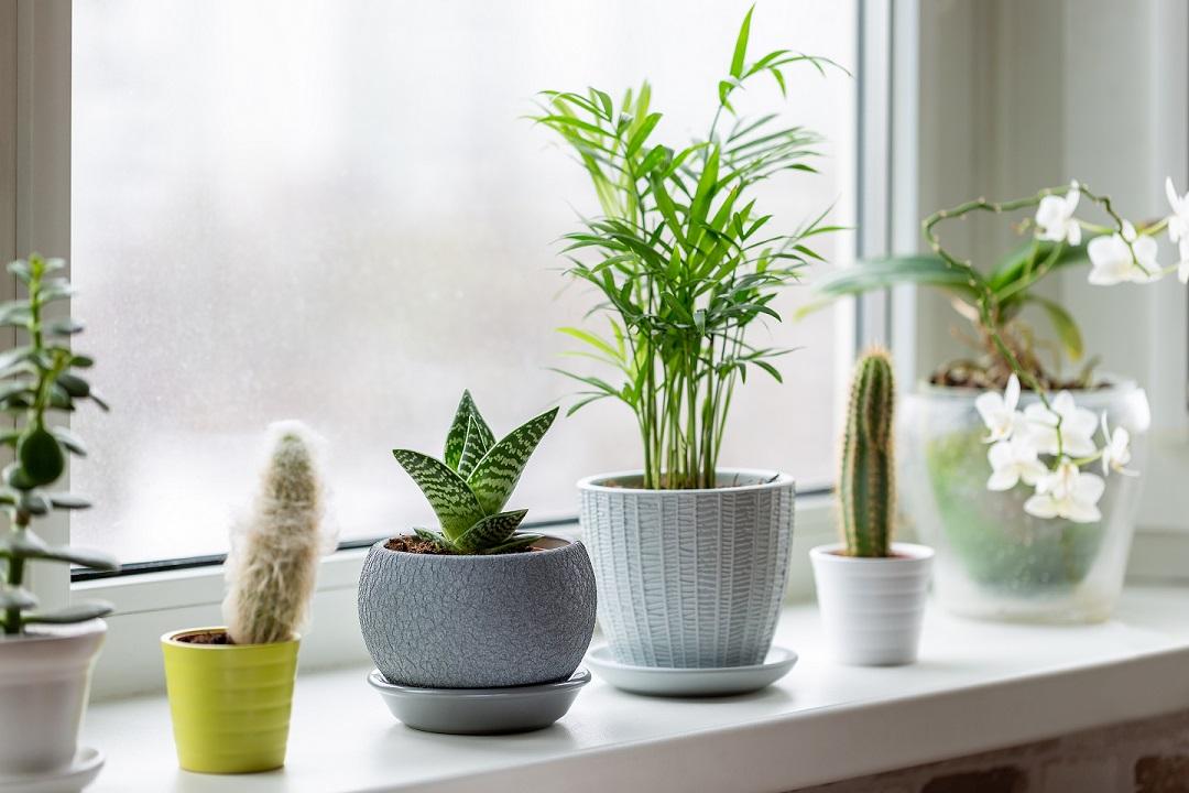 plantas en vacaciones